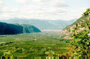 "Auer: The ""Etschtal""-valley towards Bozen is an immense apple-plantage"