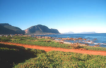 Bettys Bay colony of African penguins at Stony Point coastline panorama