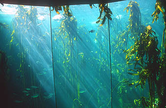 Cape Town Waterfront Two Oceans Aquarium kelp forest