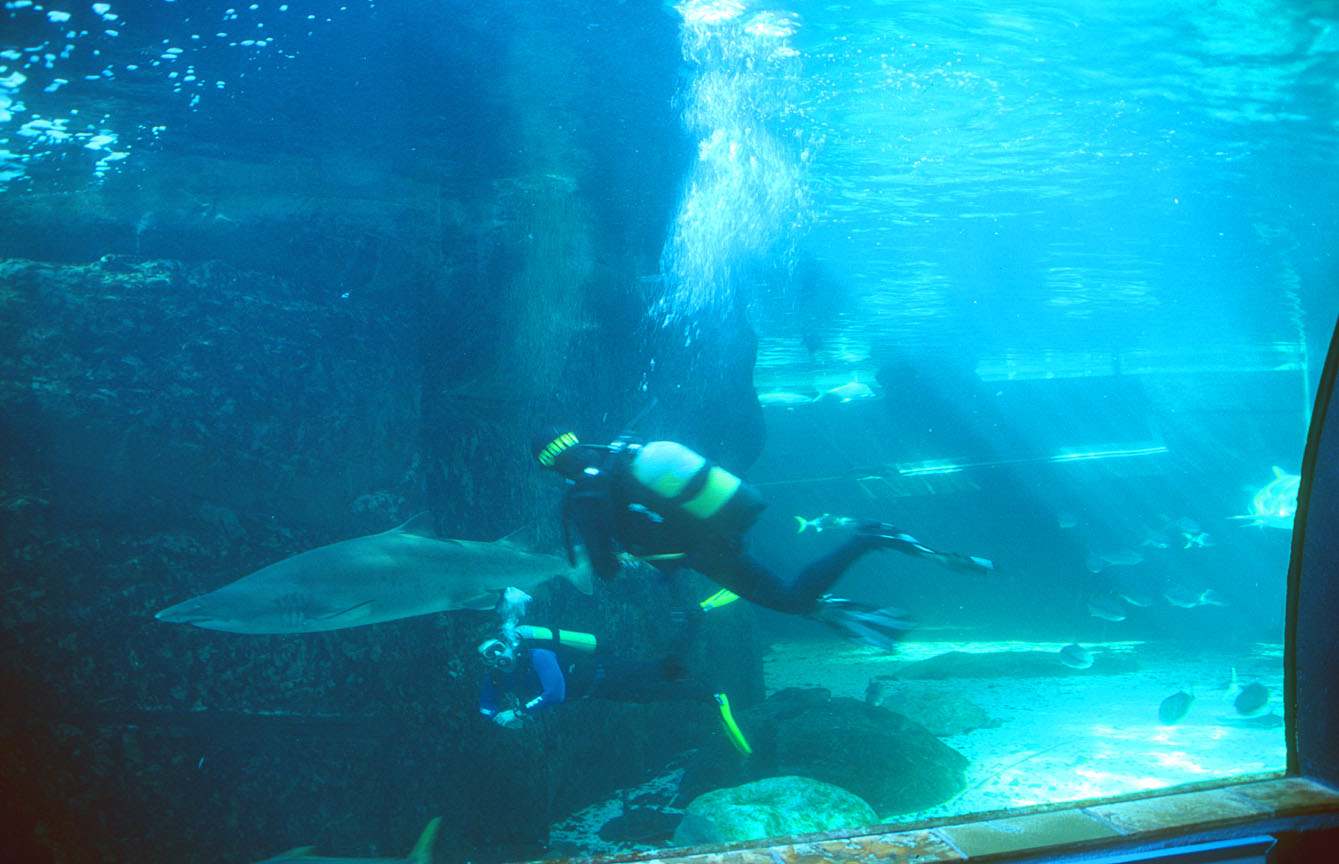 Two Oceans Aquarium Cape Town : Cape Town Travel Pictures: South Africa, Table Mountain, Waterfront ...