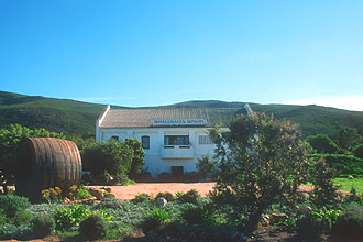Hermanus Whalehaven Winery