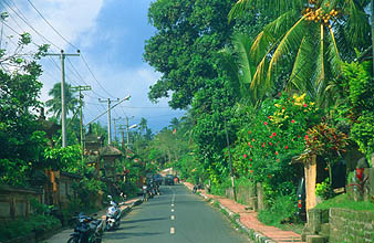 Bali Ubud street with coconut palm and hibiscus