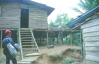 Iban Longhouse entrance with pigs