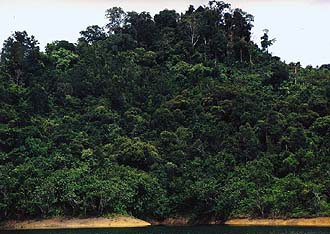 Tropical Rainforest on the shores of Batang Ai Reservoir, Sarawak
