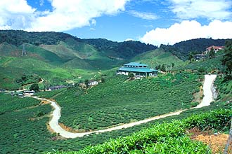 Cameron Highlands tea plantation panorama