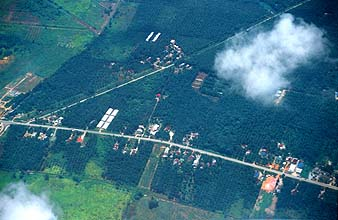 street through countryside with palm oil plantations from aircraft