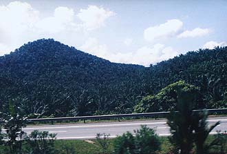 North-South Highway and Oilpalm Plantation