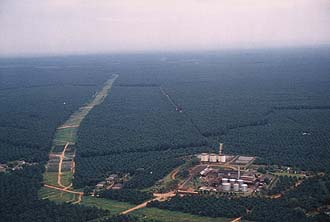 Selangor: Palm oil plantations and oil mill