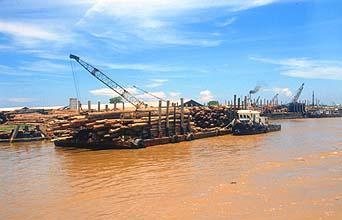 Miri logs stacked in barges at a marshaling area near the Baram river mouth