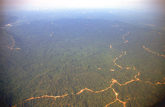 Miri tropical rainforest with logging roads from aircraft on flight to Mulu