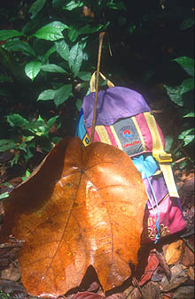 Gunung Mulu National Park big leaf with daypack