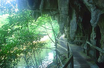 Gunung Mulu national park boardwalk from Wind to Clearwater Cave