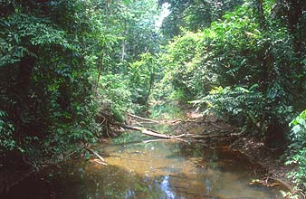 Gunung Mulu national park djungle river