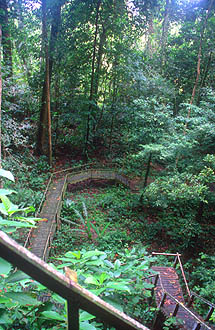 Gunung Mulu national park wooden boardwalk to Wind and Clearwater Cave