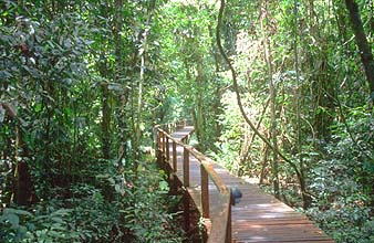 Mulu boardwalk to deer and lang cave 1