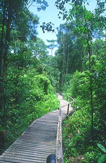 Mulu boardwalk to deer and lang cave 2