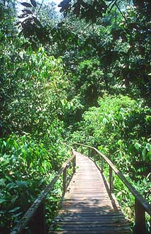 Mulu boardwalk to deer and lang cave 3