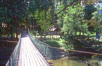 Mulu suspension bridge to the national park headquarters