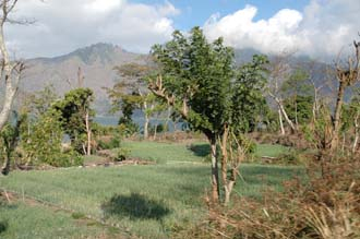 DPS Bali fertile fields on the shores of Lake Batur 3008x2000