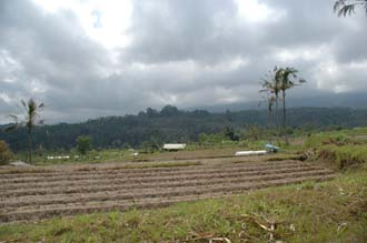DPS Bali fields near street from Pelaga to Kintamani 01 3008x2000