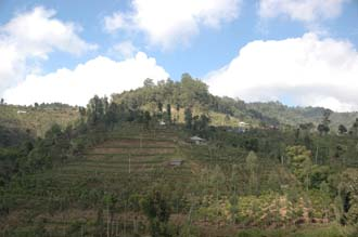 DPS Bali fields near street from Pelaga to Kintamani 02 3008x2000