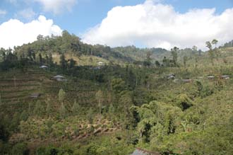 DPS Bali fields near street from Pelaga to Kintamani 03 3008x2000