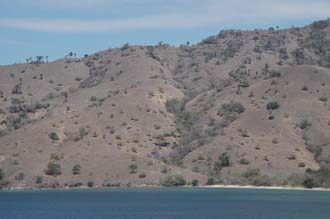 BMU Komodo Island Ombak Putih sailing ship dry vegetation on the island 1 3008x2000