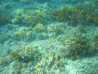 AMI Lombok Pulau Lampu Island snorkelling underwater picture corals and fishes 1 2272x1704