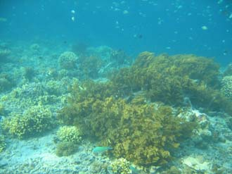AMI Lombok Pulau Lampu Island snorkelling underwater picture corals and fishes 2 2272x1704