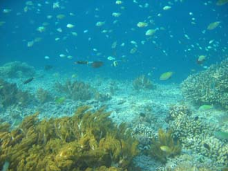 AMI Lombok Pulau Lampu Island snorkelling underwater picture corals and fishes 3 2272x1704