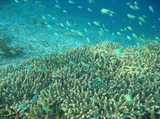AMI Lombok Pulau Lampu Island snorkelling underwater picture corals and fishes 6 2272x1704