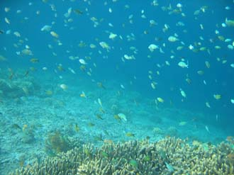 AMI Lombok Pulau Lampu Island snorkelling underwater picture corals and fishes 7 2272x1704