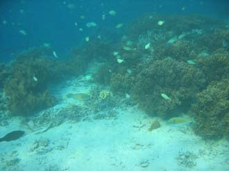 AMI Lombok Pulau Lampu Island snorkelling underwater picture corals and fishes 8 2272x1704