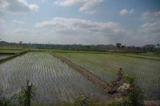 AMI Lombok rice fields near Karangbayan 1 3008x2000