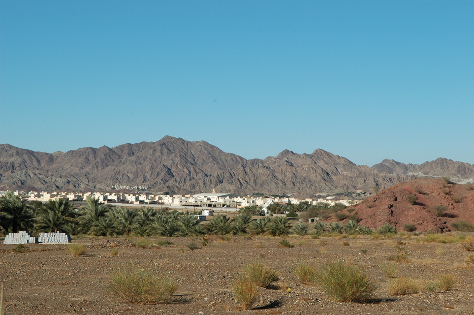 Town with white houses and palm trees and spectacular hajar mountain